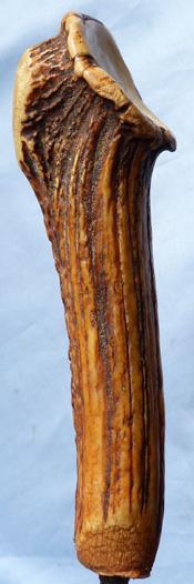 staghorn-dagger-2