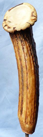 staghorn-dagger-3