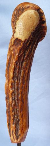 staghorn-dagger-5