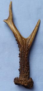 staghorn-hilt-2